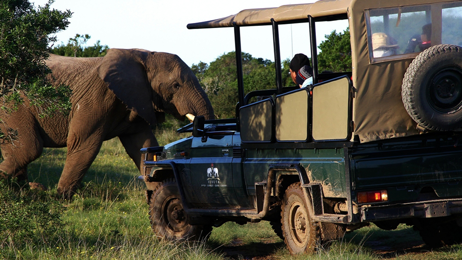 Elephant sighted on a game drive in Sibuya Game Reserve, South Africa