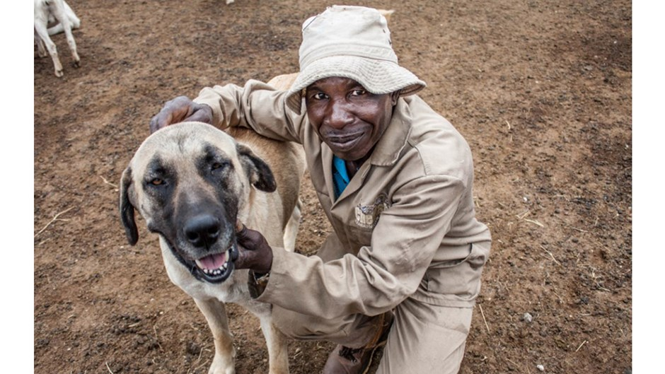 Farm worker with Anatolian shepherd dog, Jenna Brager/Courtesy of Cheetah Conservation Fund