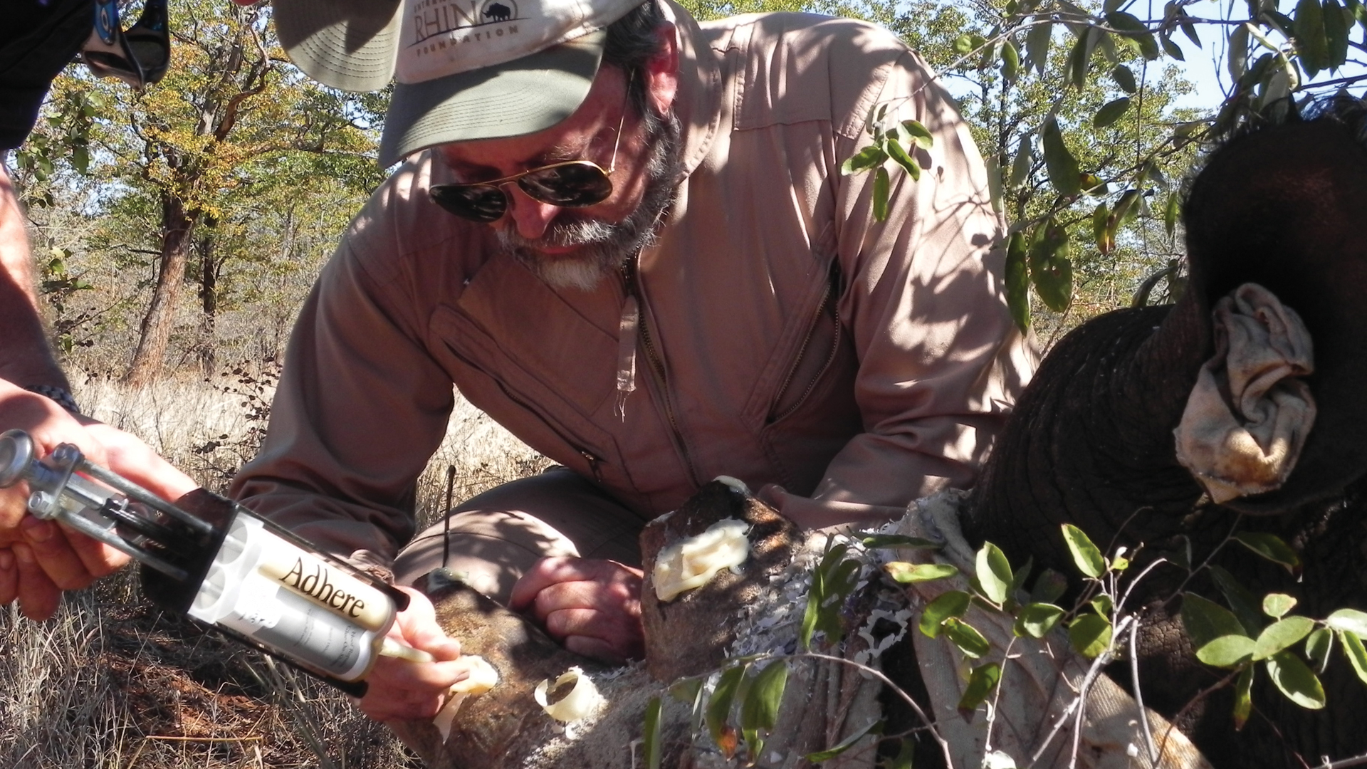 Raoul du Toit tending to a tranquilised rhino