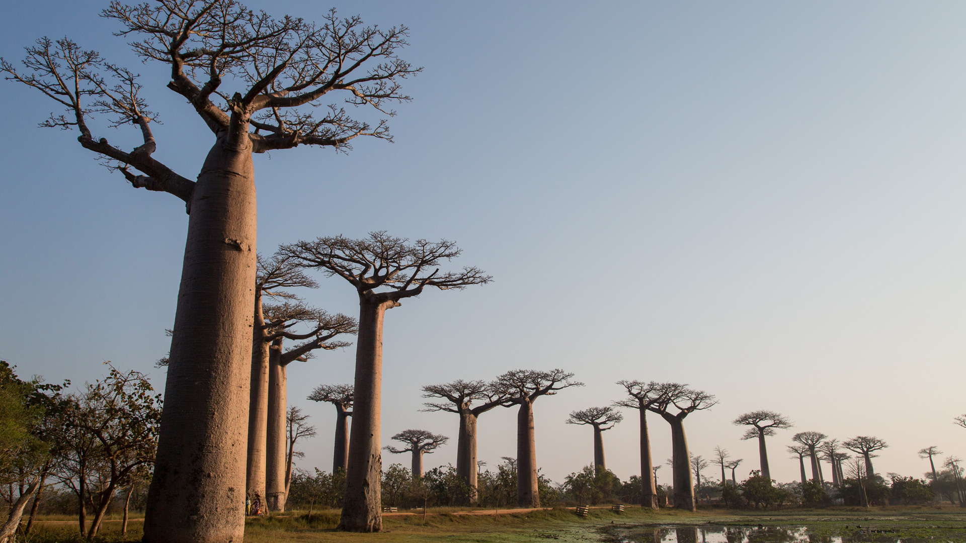 Madagascar by Robin Hoskins - Avenue of Baobabs