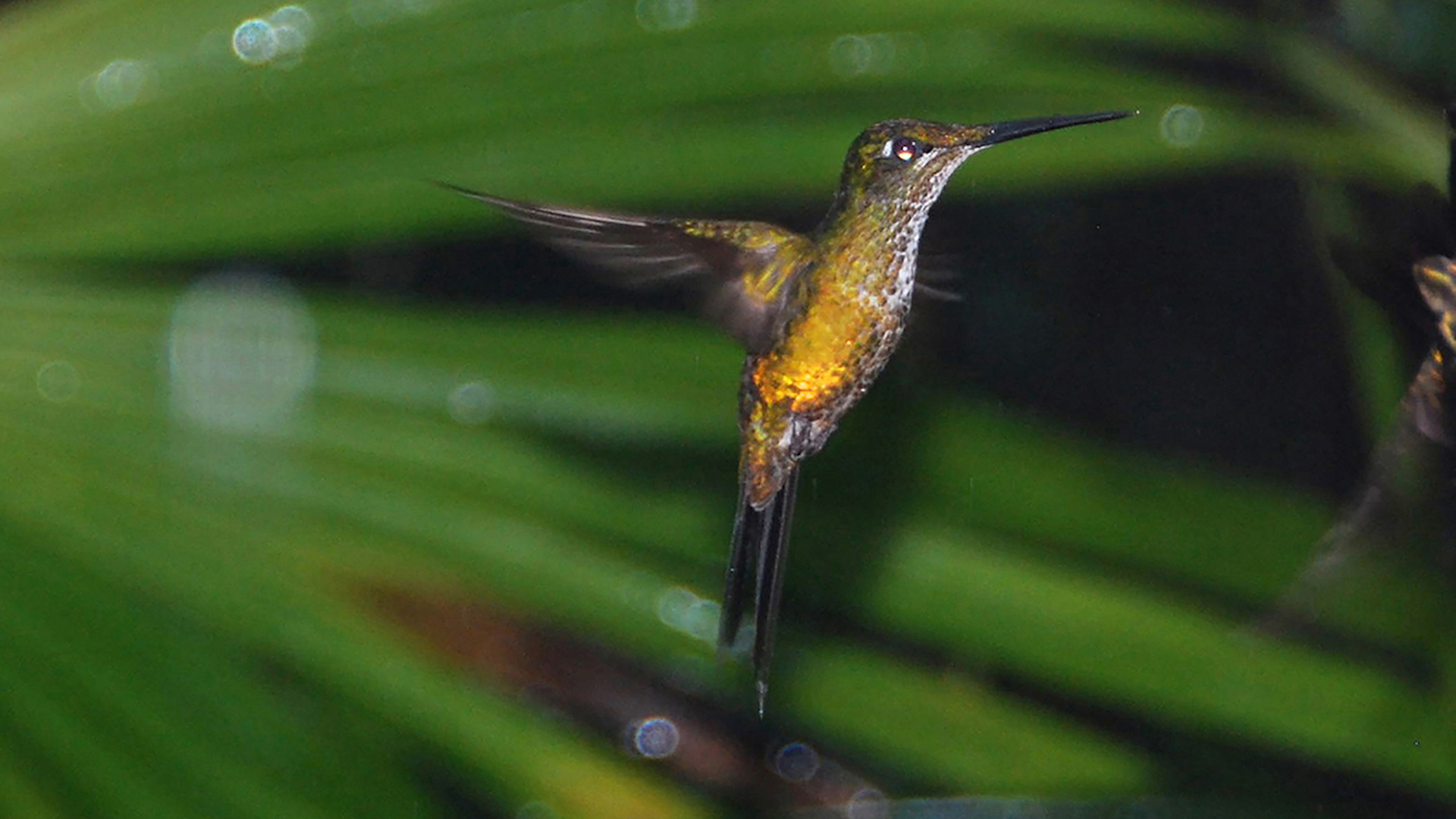 Ecuador and Galapagos - Islands and Cloud Forest - Fred and Sharon Tooley - Birdlife