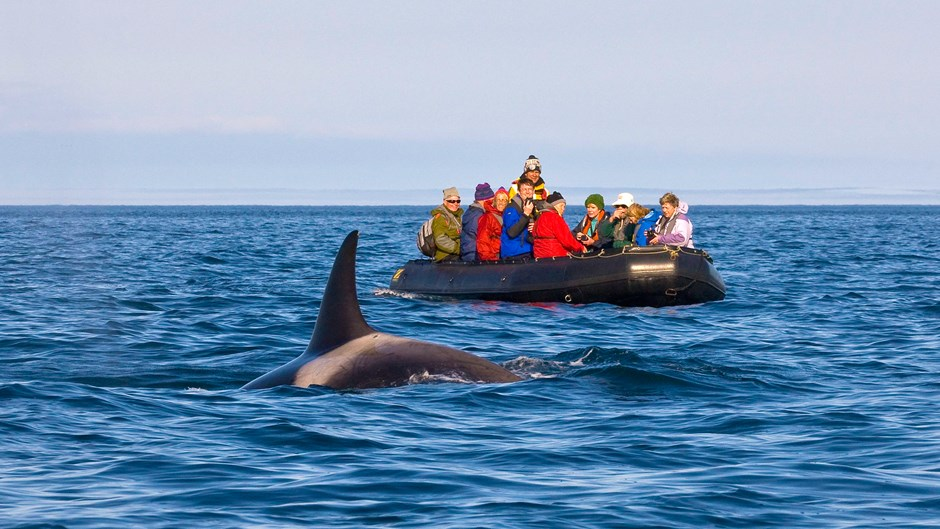 Orca, Kamchatka | © J. E. Ross, Heritage Expeditions