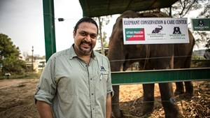 Kartick Satyanarayan at the Elephant Conservation & Care Centre in Uttar Pradesh, India | © Wildlife SOS