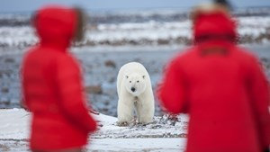 Polar bear and people,Arctic Canada