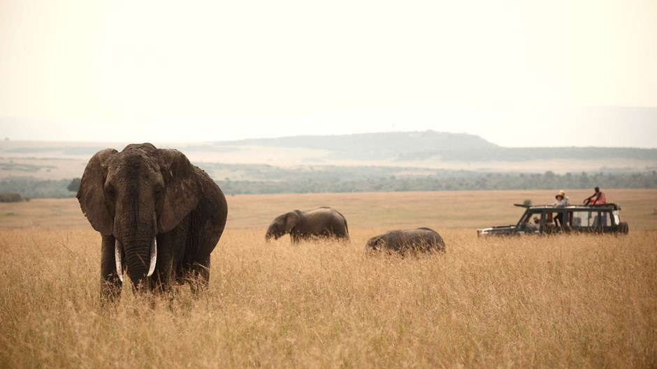 Elephants in the Masai Mara | © Rekero Camp, Kenya