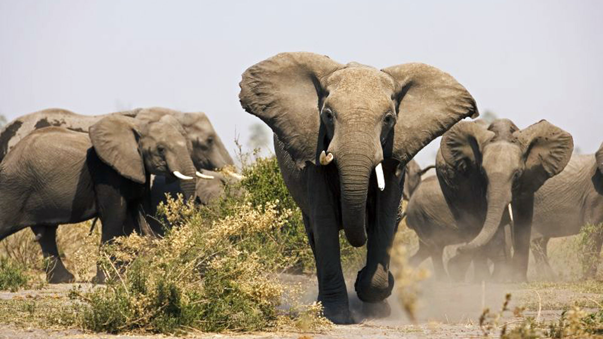 Elephant|© Great Plains Conservation