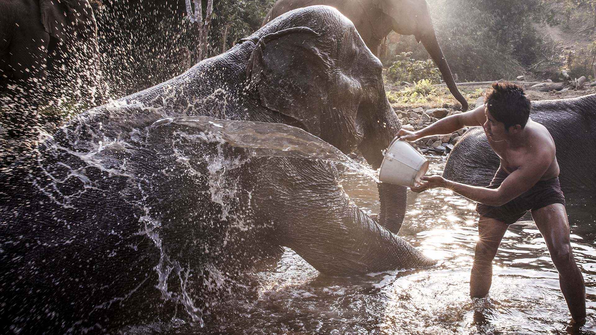 A mahout and his elephant in Myanmar | © Ken Kochey