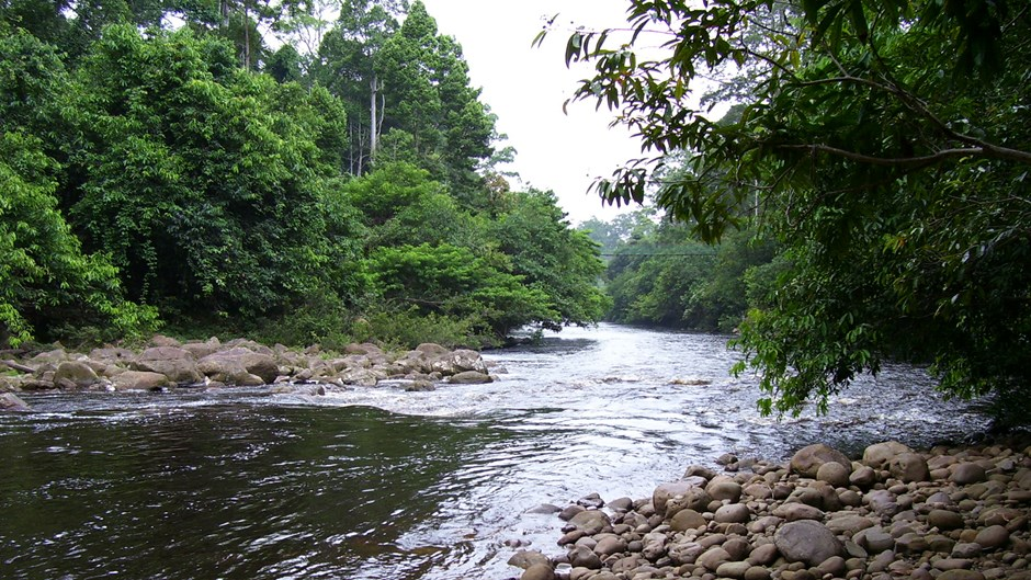 Maliau River tributary, tian yake, Flickr