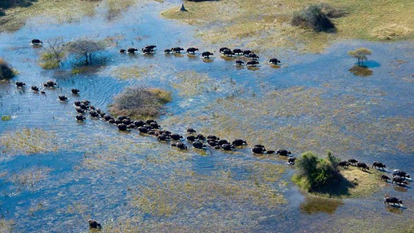 Botswana wildlife safari: Aerial view of Kwedi Concession, Okavango Delta