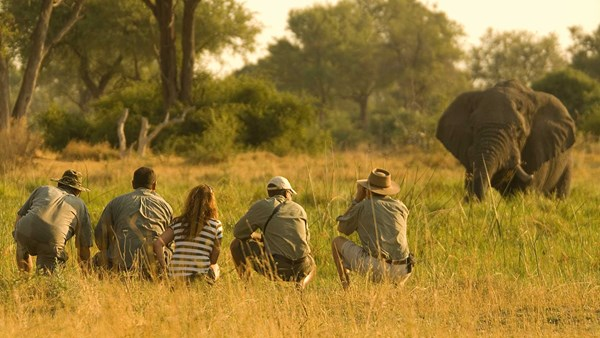 Elephant spotting in the Linyanti, Botswana