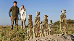 Botswana wildlife safari: Meerkats at Jacks Camp