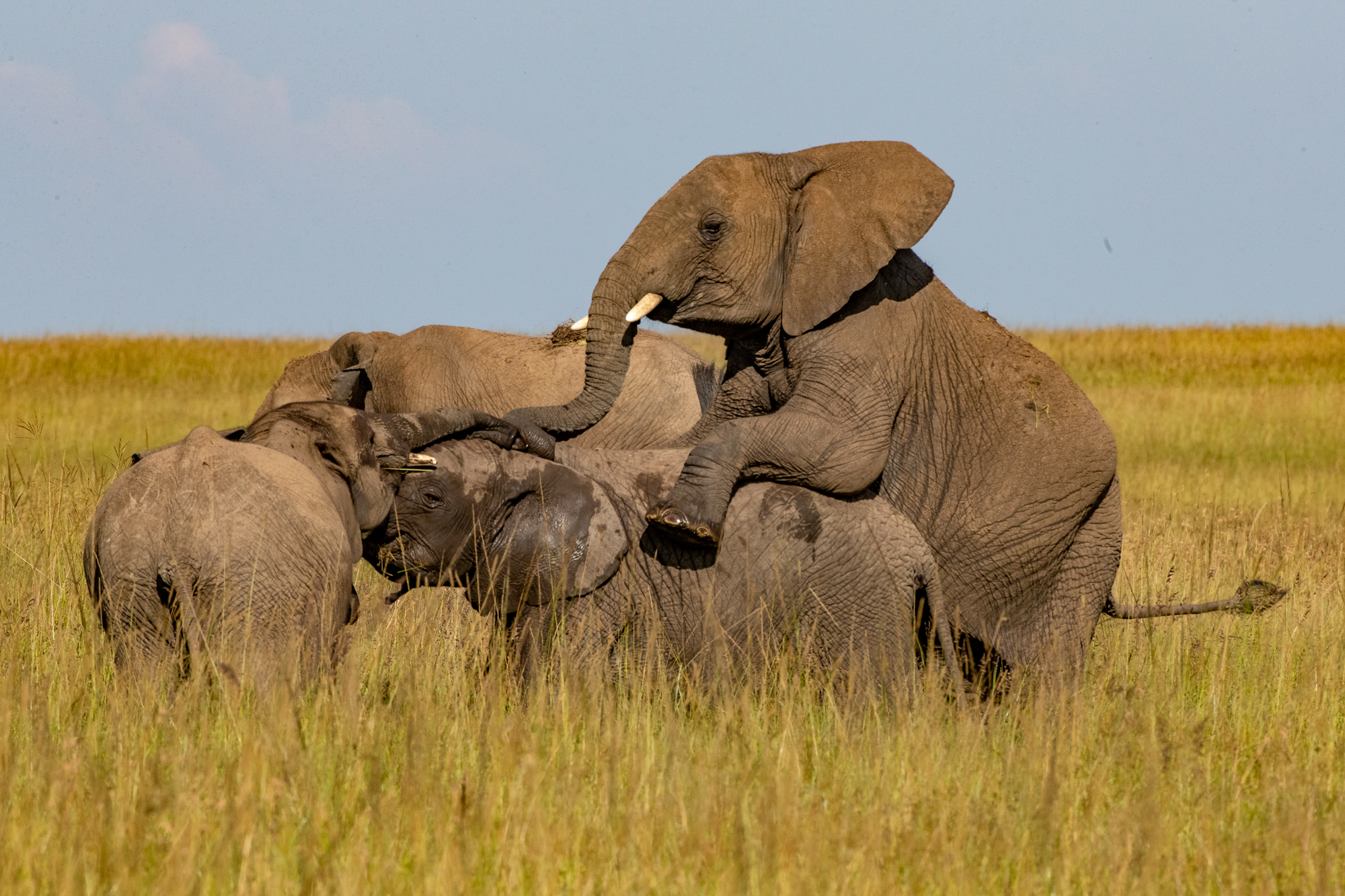 Kenya Rekero Elephants Steve Winter