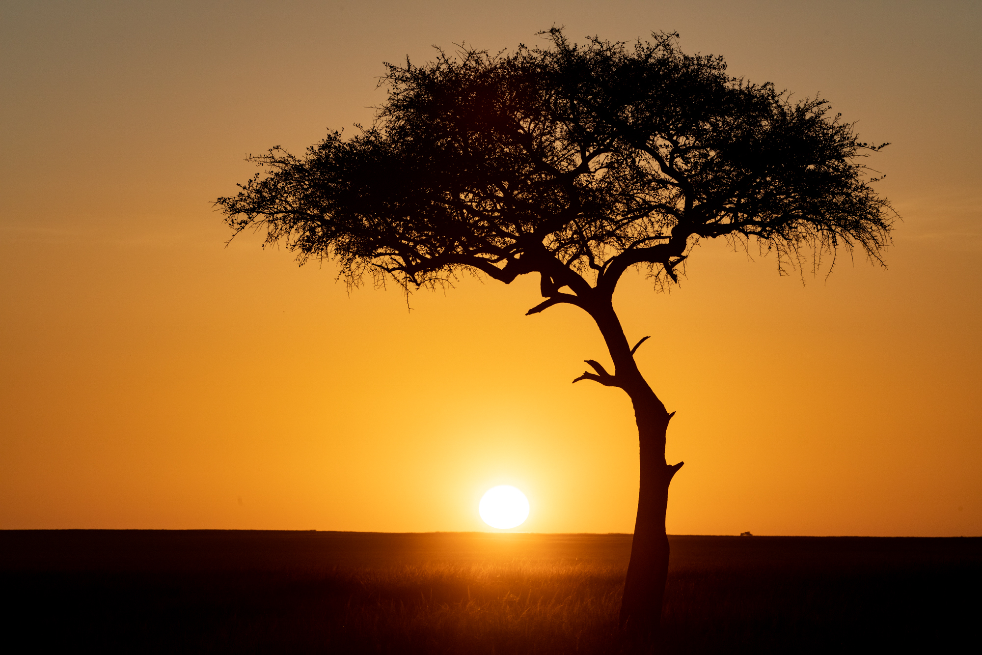 Kenya Rekero Sunset Steve Winter
