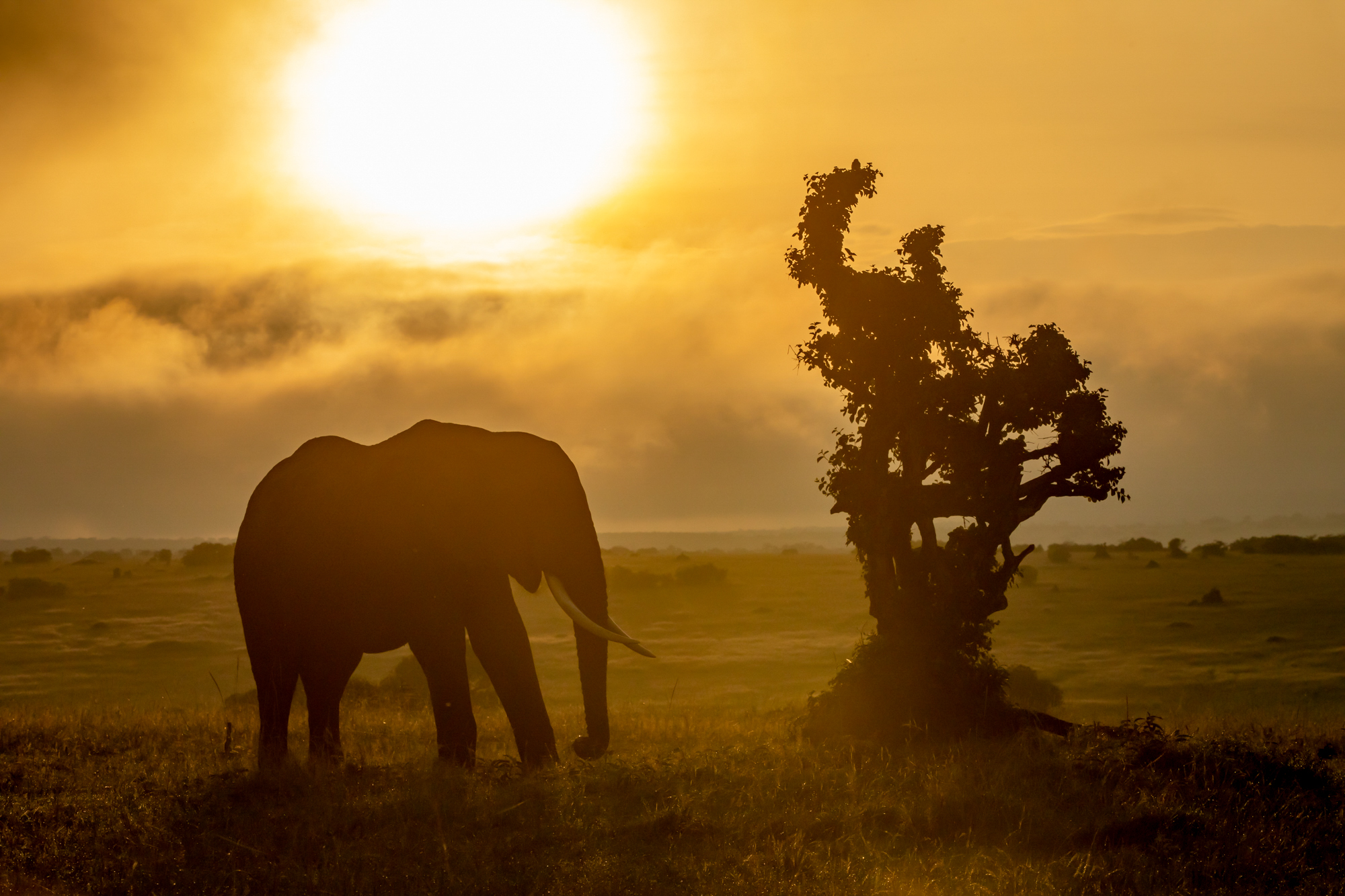Kenya Rekero Elephant Sunset Steve Winter