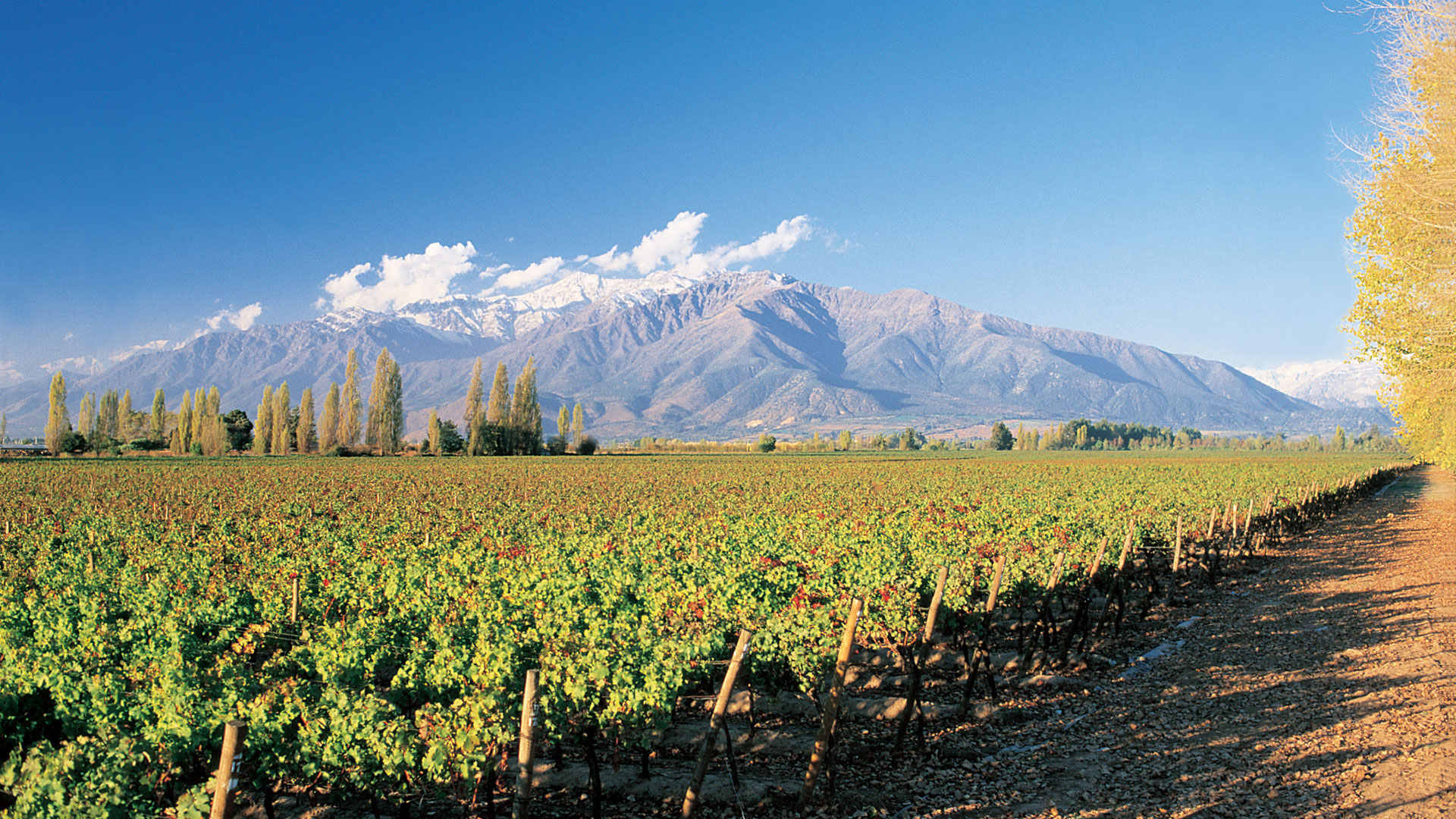 Winelands, Chile