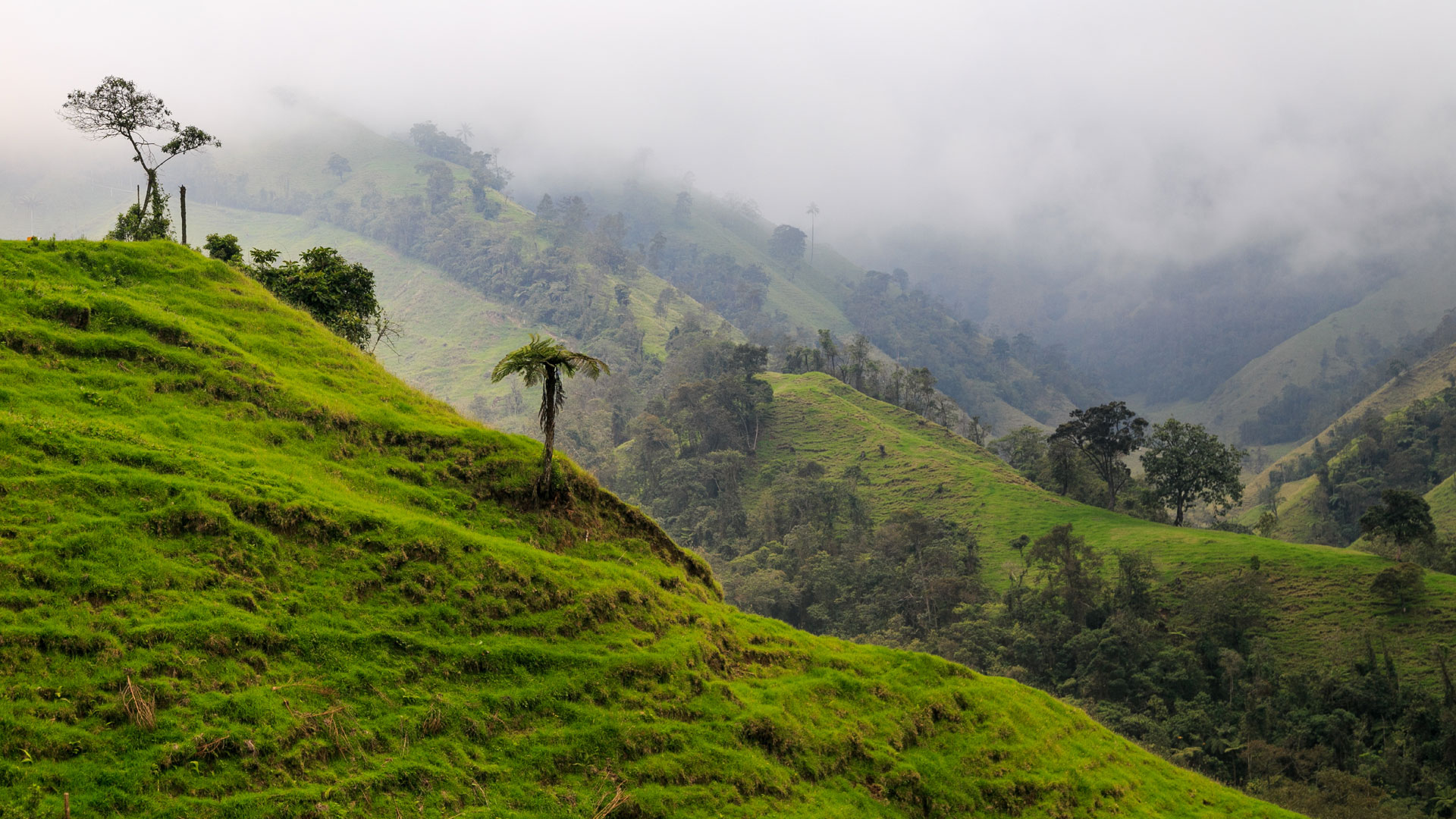 Coffee landscape, Colombia