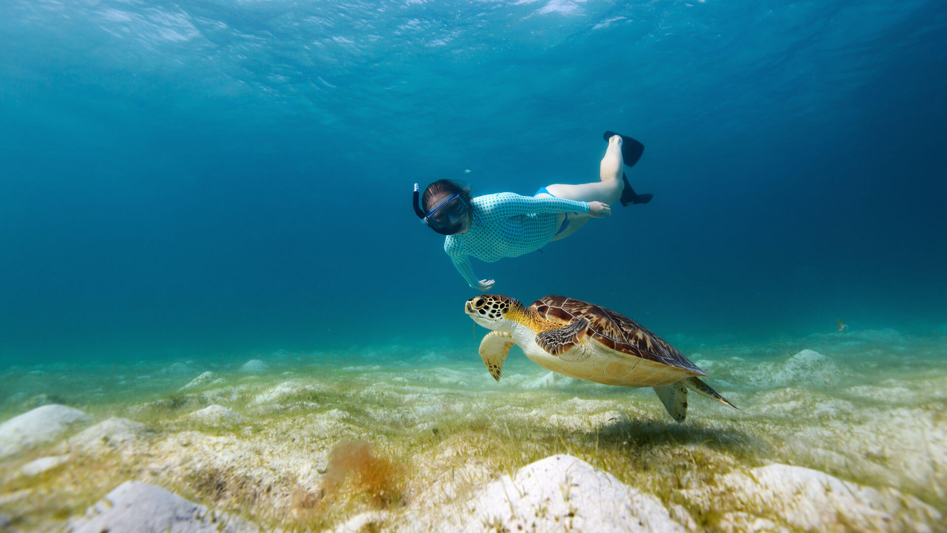 Swimming with turtles, Galapagos Islands