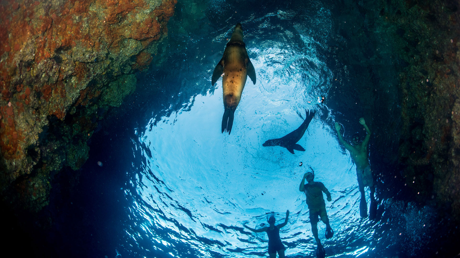 Snorkelling with sea lions,  Galapagos Islands