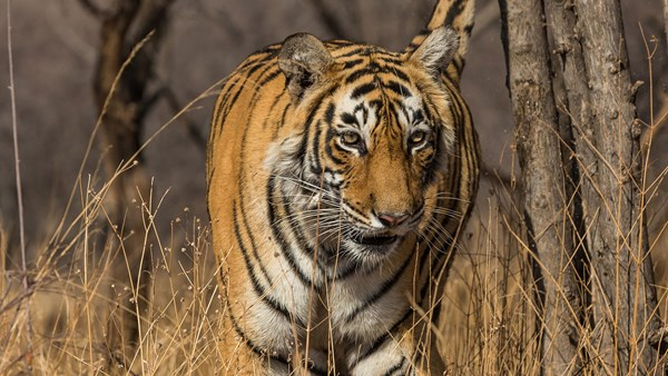 India, Natural World Safaris