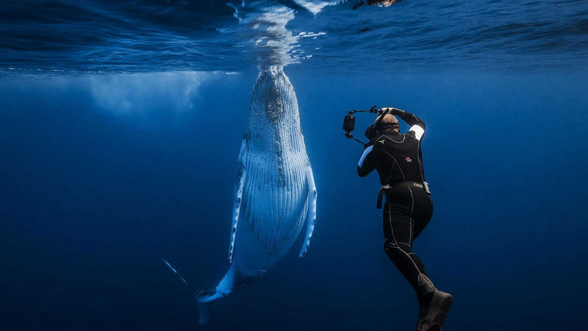 Swimming with humpbacks, Indian Ocean