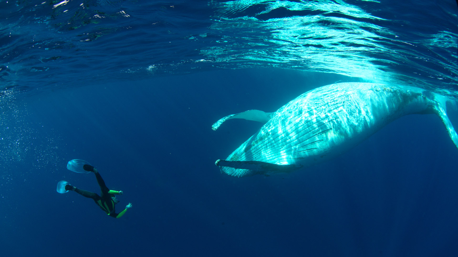 Swimming with humpbacks in Reunion Island - Patrick Dykstra