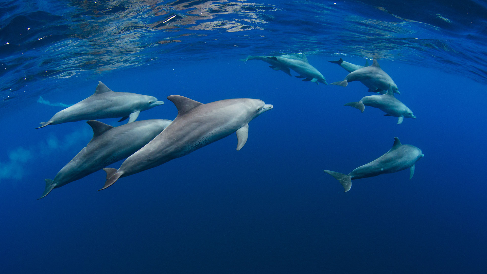 Dolphins, Indian Ocean