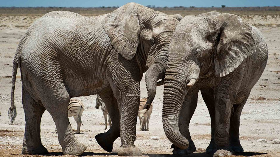 Namibia safari; Elephants at Etosha