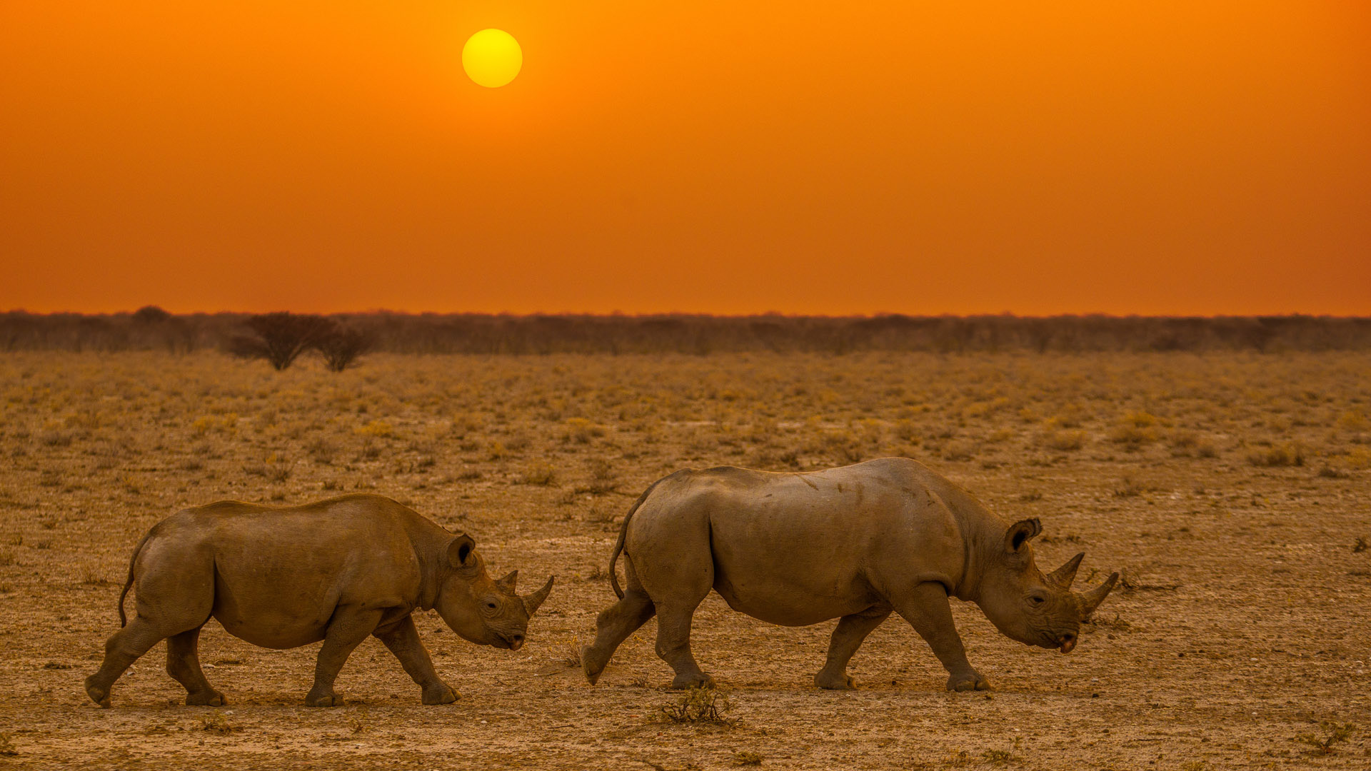Namibia safari by Shannon wild