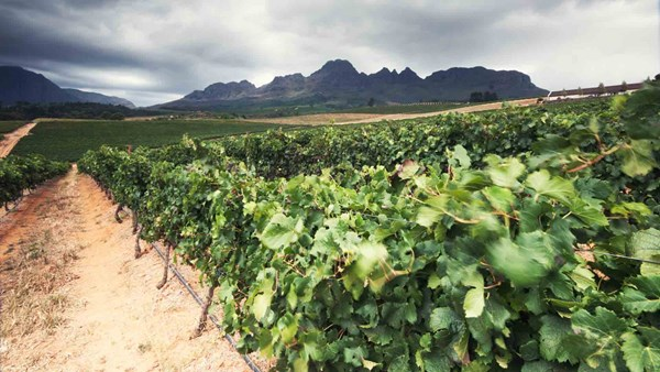 winelands, South Africa