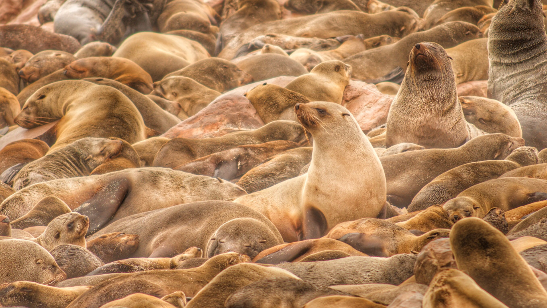 Seals at Cape Cross in South Africa by Russ MacLaughlin