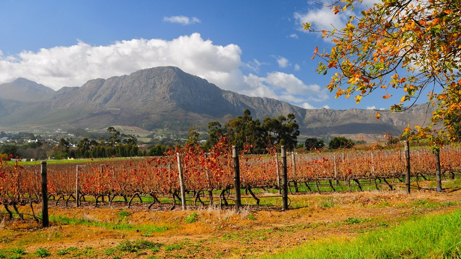Franschhoek winelands, Richard Cavalleri, South Africa