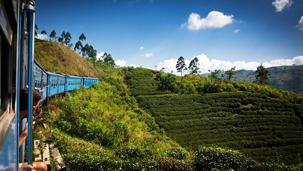 Tea Plantations, Sri Lanka