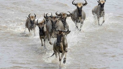Great Migration river crossing, Tanzania