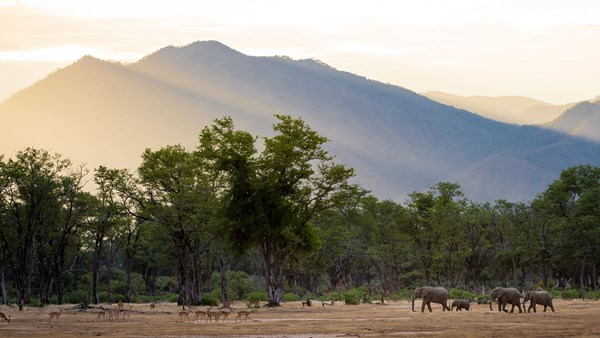 Zimbabwe elephants at Ruckomechi Camp