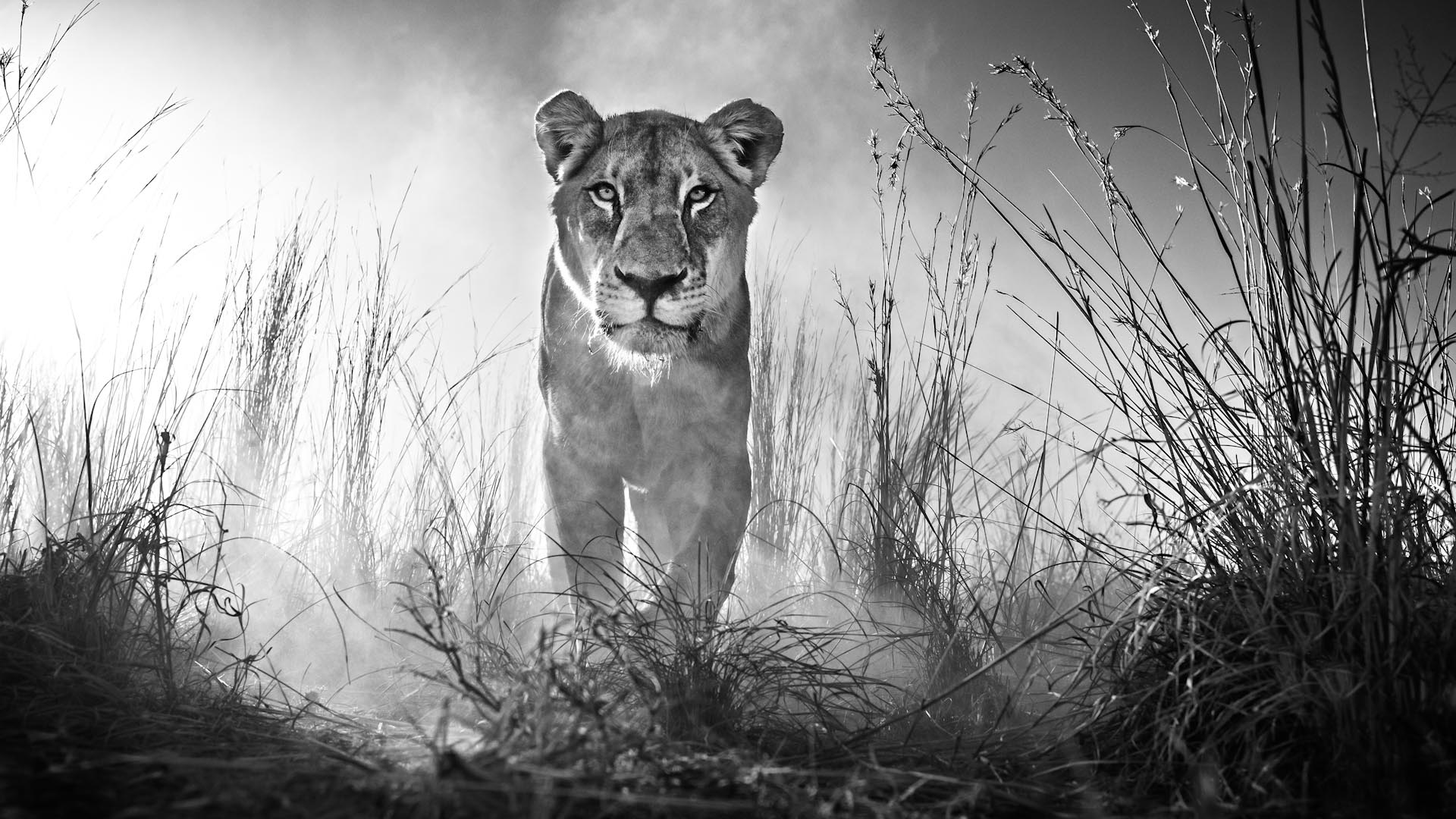 Gladiator by David Yarrow