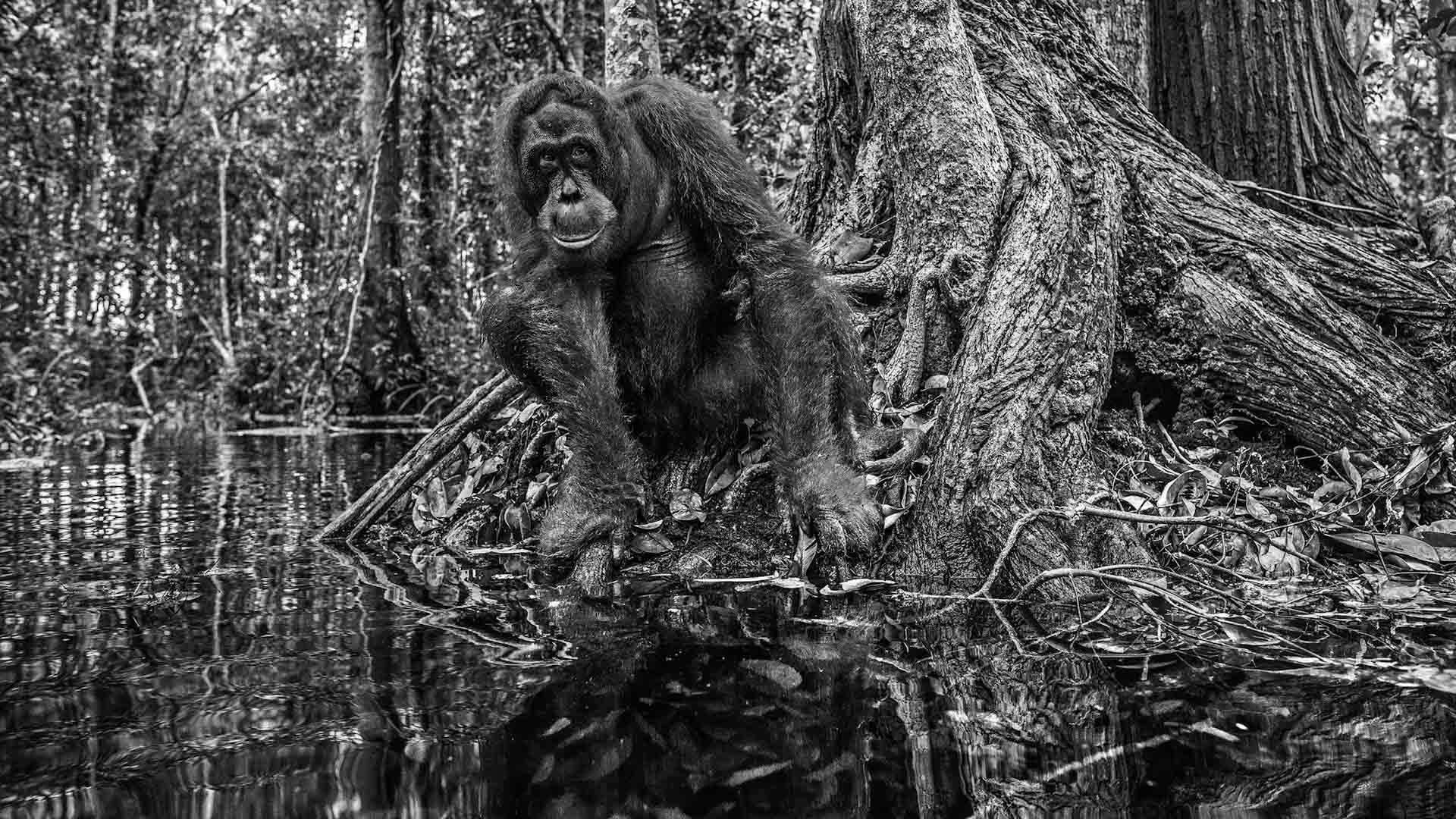 Roots by David Yarrow