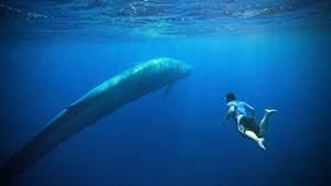 Swimming with blue whales in Sri Lanka