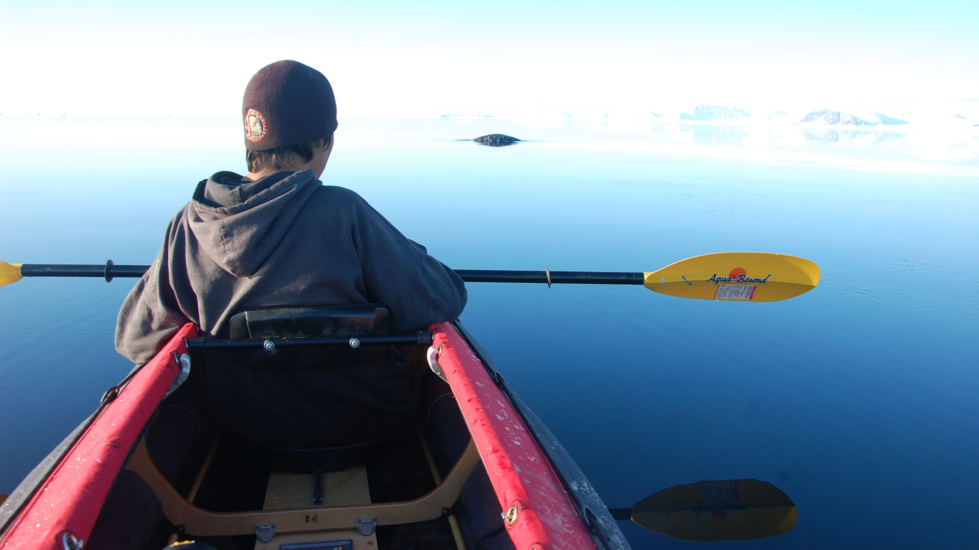 Kayak with narwhal