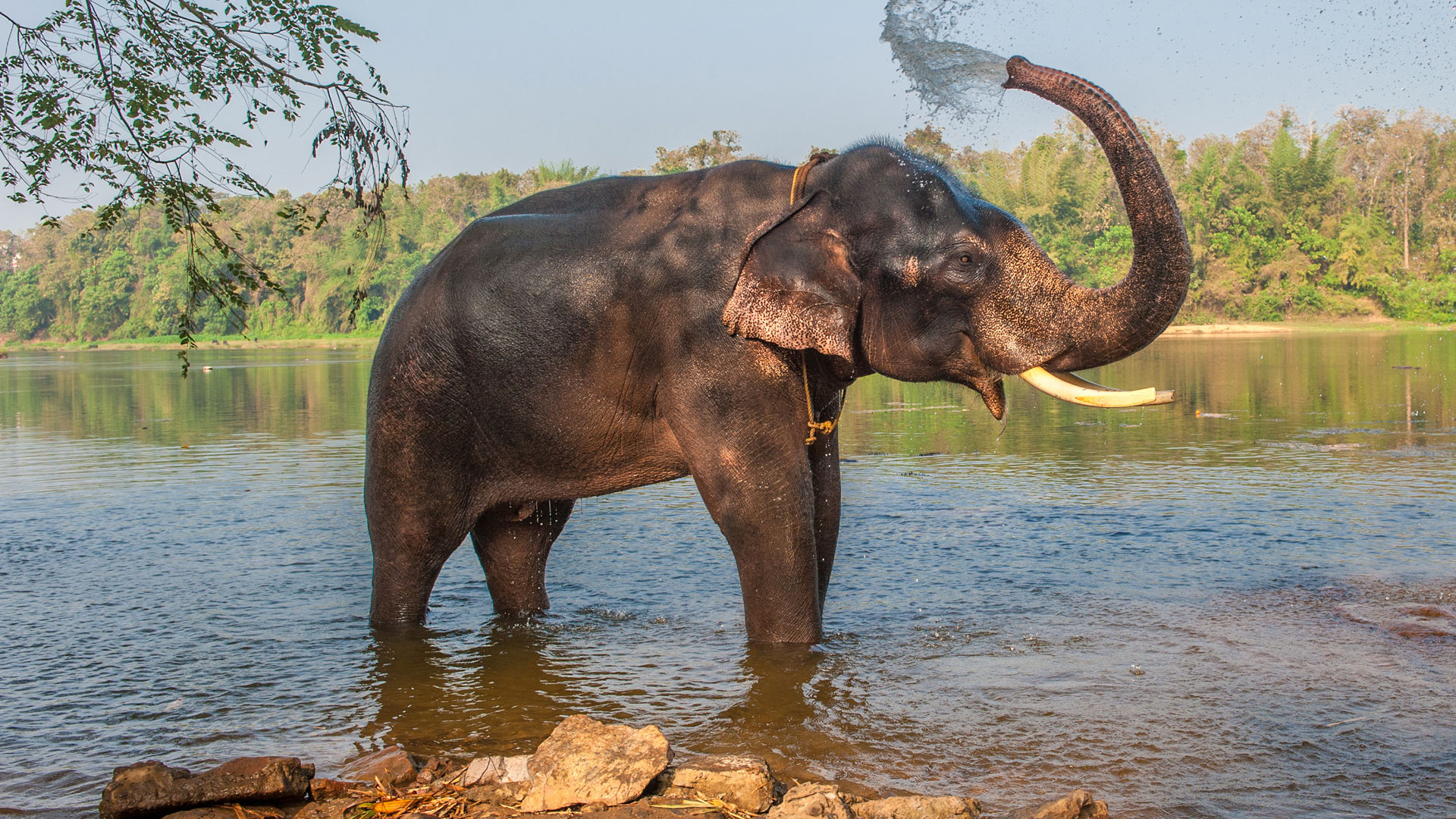 Top 10 animals to see in India - Natural World Safaris
