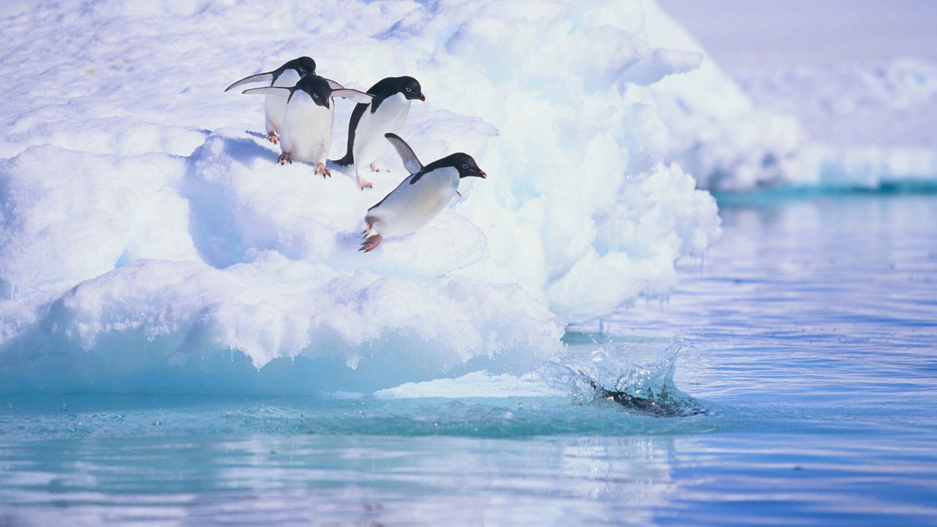 Antarctica in march natural world safaris for Can you go to antarctica