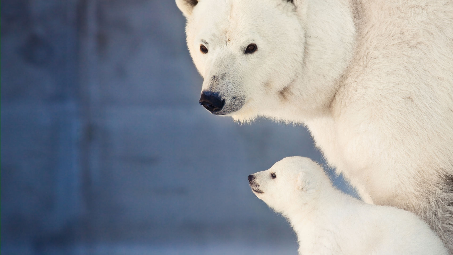 Parks Amp Attractions In Arctic Canada Natural World Safaris