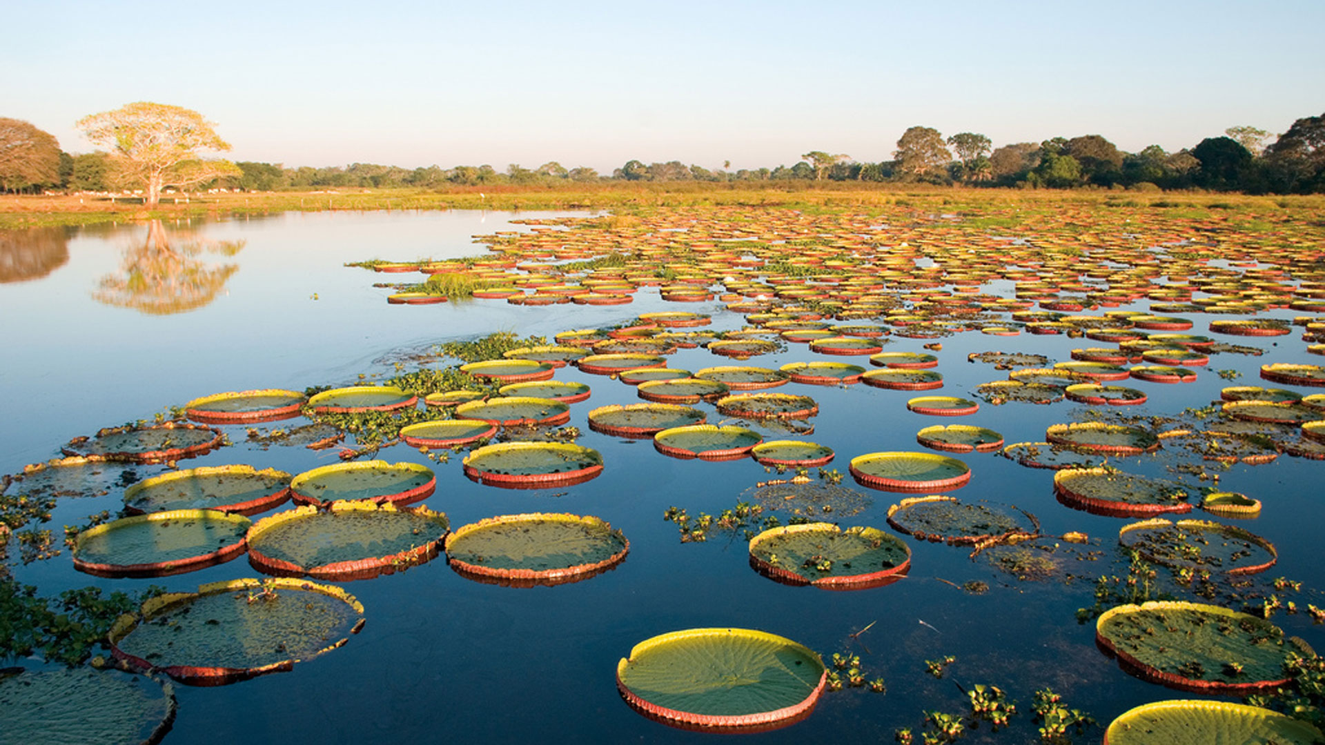 Image result for Pantanal