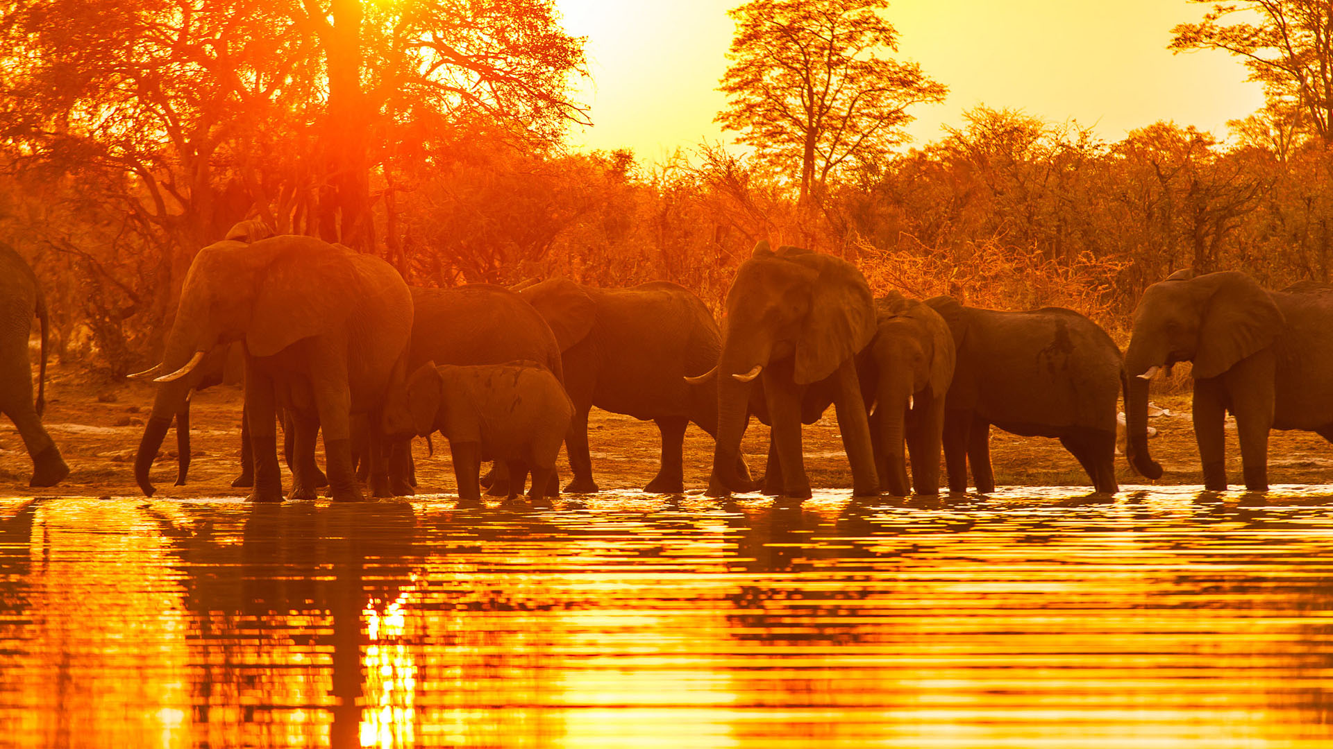 inspiration for your next wildlife safari holiday natural world