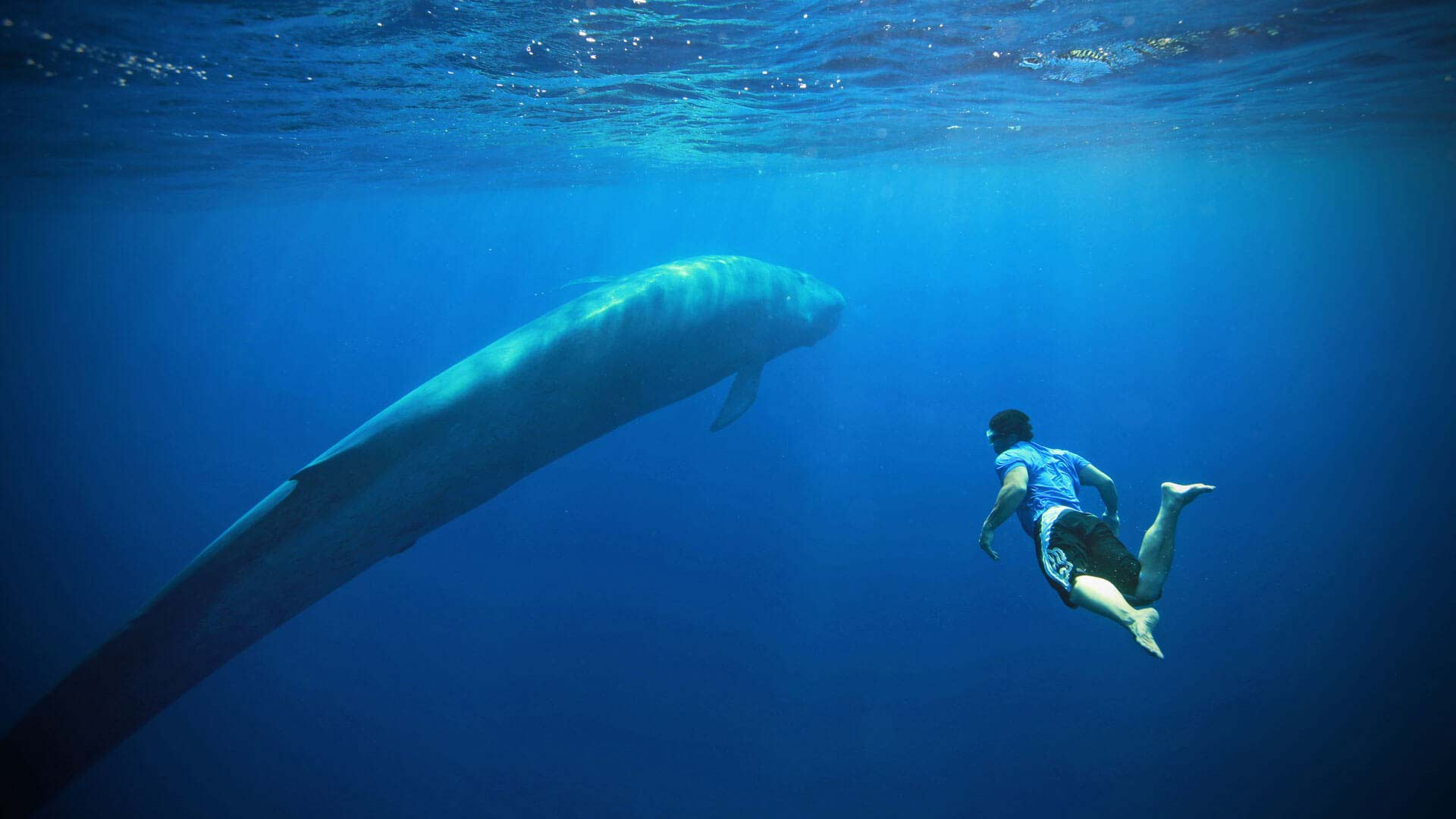 Blue Whale Watching Holidays & Expeditions - Natural World Safaris
