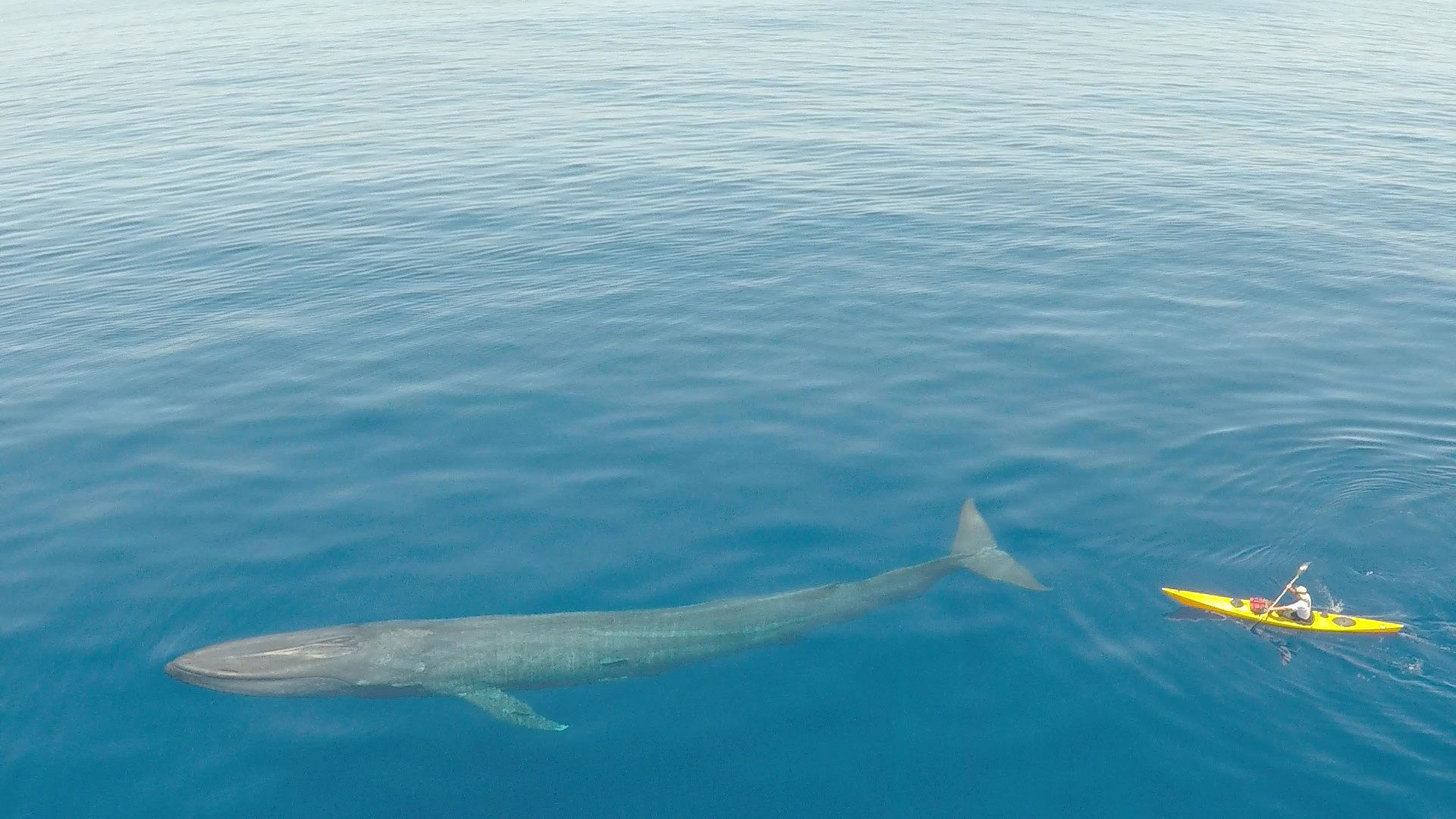 Blue Whale Watching Holidays Expeditions
