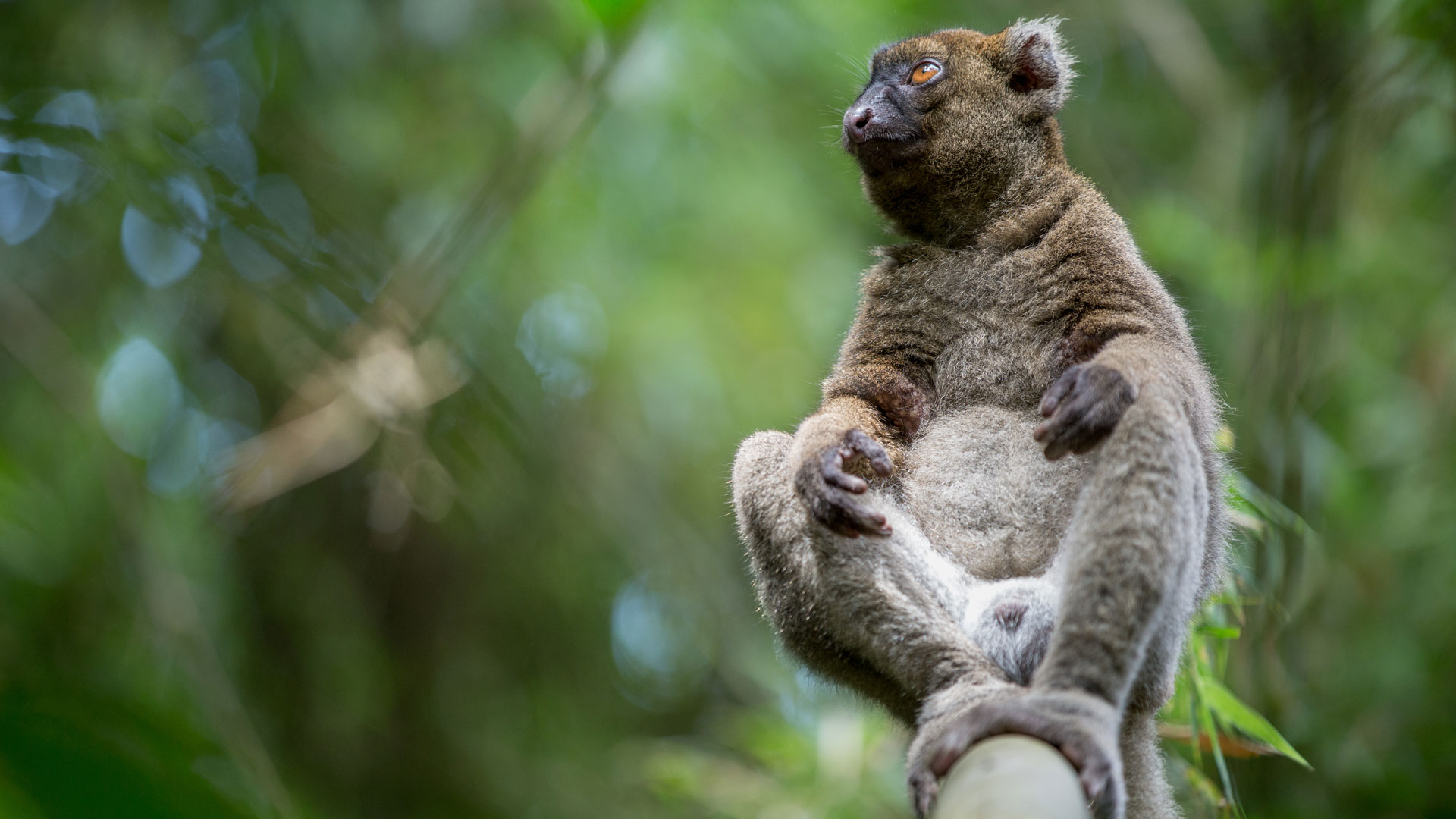 best place to see madagascar lemurs natural world safaris
